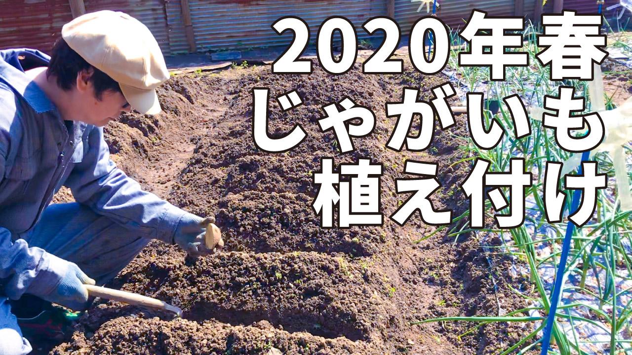2020年春じゃがいも植え付け